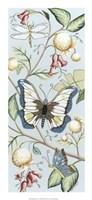 Butterfly Sky II Framed Print