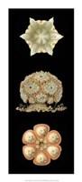 "Kaleidoscope Anemone III by Jillian Jeffrey - 10"" x 22"""