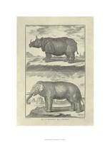 "Elephant Rhino by Denis Diderot - 20"" x 26"""