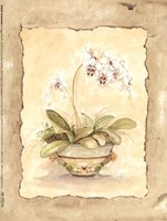 """Orchid Sanderiana by Peggy Abrams - 6"""" x 8"""""""