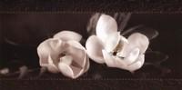 "Soft Magnolias I by Christine Elizabeth - 24"" x 12"""