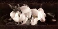 """Soft Magnolias II by Christine Elizabeth - 24"""" x 12"""""""