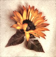 "Sand Sunflower by Donna Geissler - 12"" x 12"""