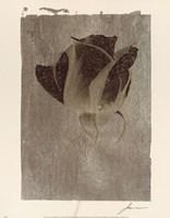 Silver Stem II Fine Art Print