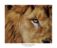 Eye of the Lion Fine Art Print
