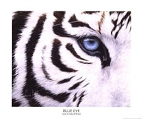 Blue Eye Fine Art Print