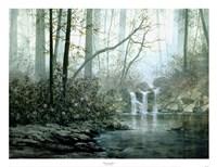Transcending Forest Fine Art Print