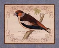 British Birds I Framed Print