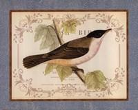 British Birds IV Framed Print