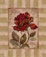 Belle Fleur I Fine Art Print