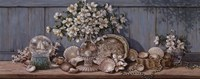 """Seashell Collection II by Janet Kruskamp - 20"""" x 8"""""""