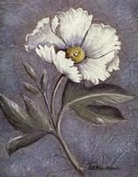 "White Poppy by Kate McRostie - 11"" x 14"""