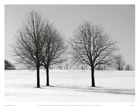 Silhouettes Of Winter I Fine Art Print