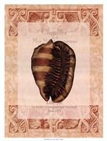 Shell Botanical IV Framed Print
