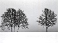 Winter Tree Line II Fine Art Print