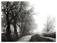 Misty Tree-Lined Road Fine Art Print
