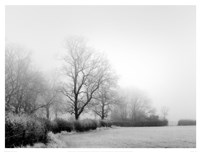 Misty Tree-Lined Field Framed Print