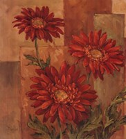 """24"""" x 24"""" Daisy Pictures"""