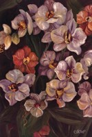 "Orchids II by Shari White - 24"" x 36"""