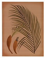"Palm Frond IV by Wilbur - 13"" x 17"""