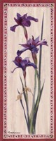 "Iris Panel II by Ruth Baderian - 4"" x 10"""
