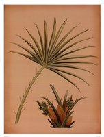 "Palm Frond I by Wilbur - 13"" x 17"""