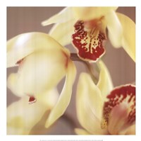 "Cymbidium Flow II by Jane Ann Butler - 20"" x 20"""
