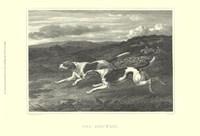 Foxhounds Fine Art Print