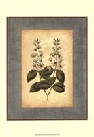 Spa Blue Curtis II Framed Print