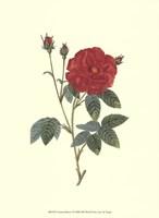 """Crimson Beauty I by Jillian Jeffrey - 10"""" x 13"""" - $10.49"""