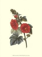 """Crimson Beauty II by Jillian Jeffrey - 10"""" x 13"""" - $10.49"""