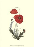 """Crimson Beauty IV by Jillian Jeffrey - 10"""" x 13"""""""
