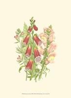 Summer Garden VIII Fine Art Print