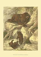 Small Brown Bear Fine Art Print