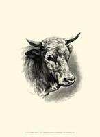 "Antique Cattle II by F Lehnert - 10"" x 13"""