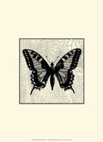 Classical Butterfly I Framed Print