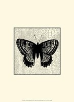 Classical Butterfly II Framed Print