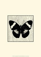Classical Butterfly III Framed Print