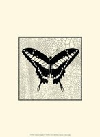 Classical Butterfly IV Framed Print