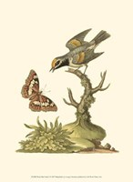 Petite Bird Study I Fine Art Print
