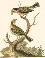 Petite Bird Study IV Fine Art Print