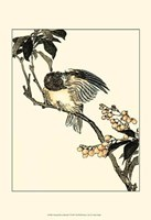 Oriental Bird On Branch V Fine Art Print