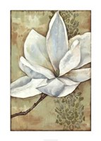 "Magnolia Majesty II by Jennifer Goldberger - 30"" x 42"", FulcrumGallery.com brand"