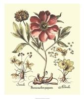 Framboise Floral I Framed Print