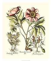 Framboise Floral II Framed Print