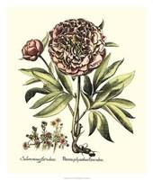 Framboise Floral III Framed Print