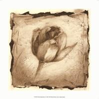 "Floral Impression I by Ethan Harper - 12"" x 12"""