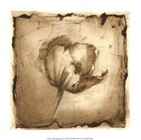 Floral Impression IV Framed Print