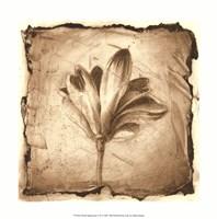 "Floral Impression VII by Ethan Harper - 12"" x 12"""
