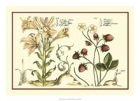 """Garden Botanica I by Vision Studio - 24"""" x 17"""""""